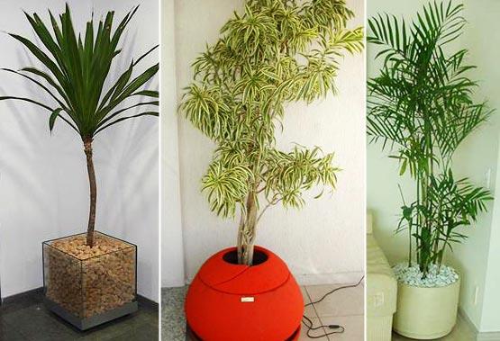 Como manter as plantas saud veis sem folhas amarelas for Plantas de casa para interior