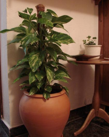 Vasos para plantas modelos e formatos wdicas wdicas - Plantas de interior altas ...