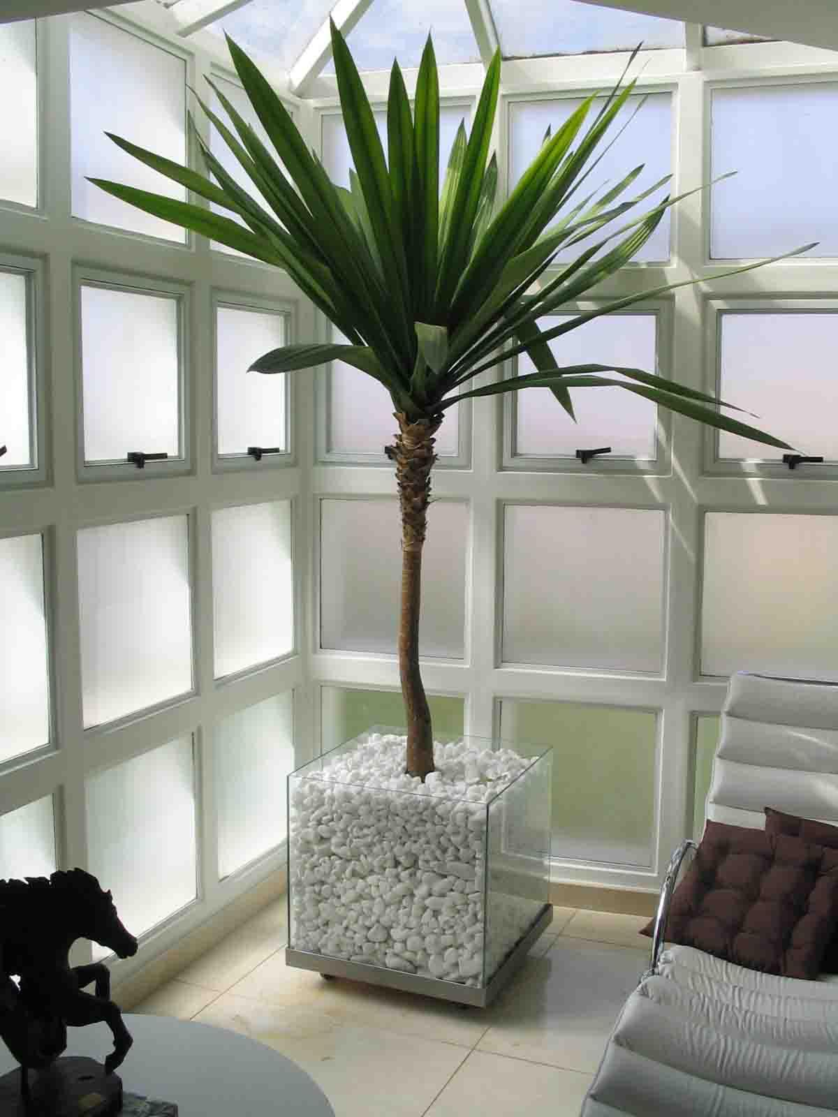 plantas para decoracao de interiores:Plantas Para Interiores De Casa