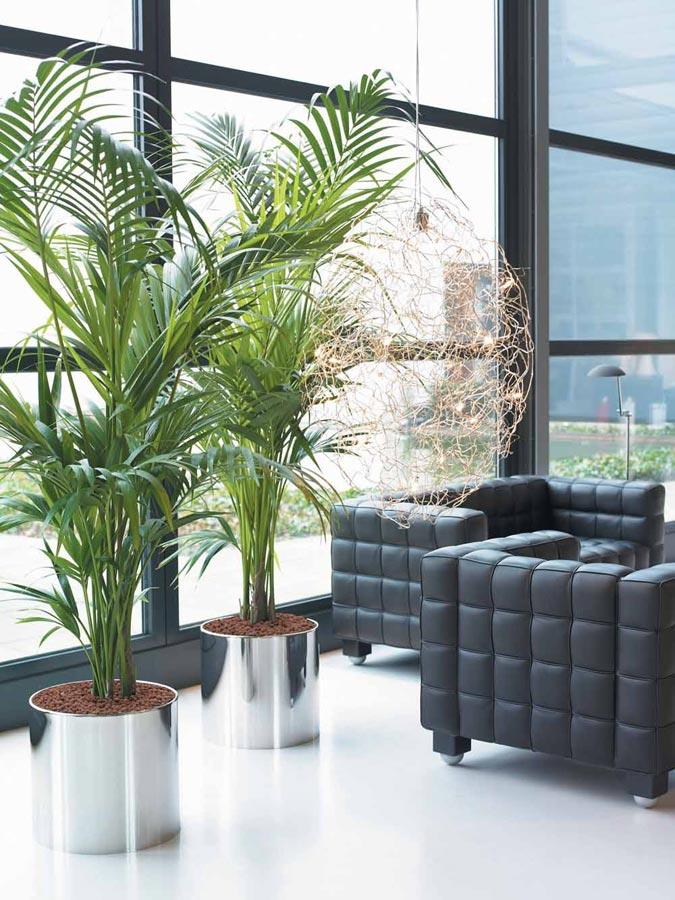 Plantas para interiores wdicas wdicas - Plantas para patios interiores ...