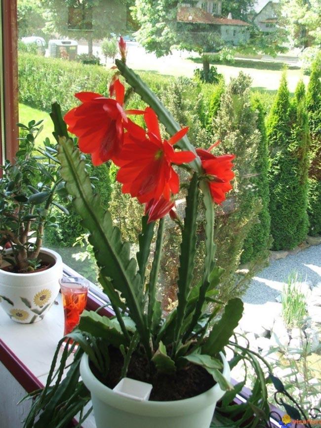plantas modelos e formatos a beleza das plantas ornamentais dicas de