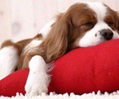 Casinhas Para Cachorro – Modelos Com Diferentes Estílos