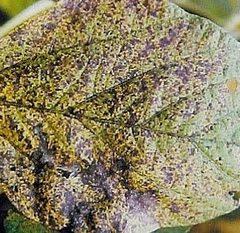 Como Prevenir Doenças Nas Plantas