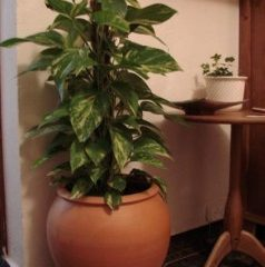 Vasos Para Plantas – Modelos E Formatos