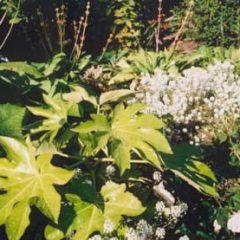 Plantas Mais Venenosas – Conheça Algumas Espécies